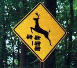 Deer Count