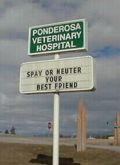 Spay Friend
